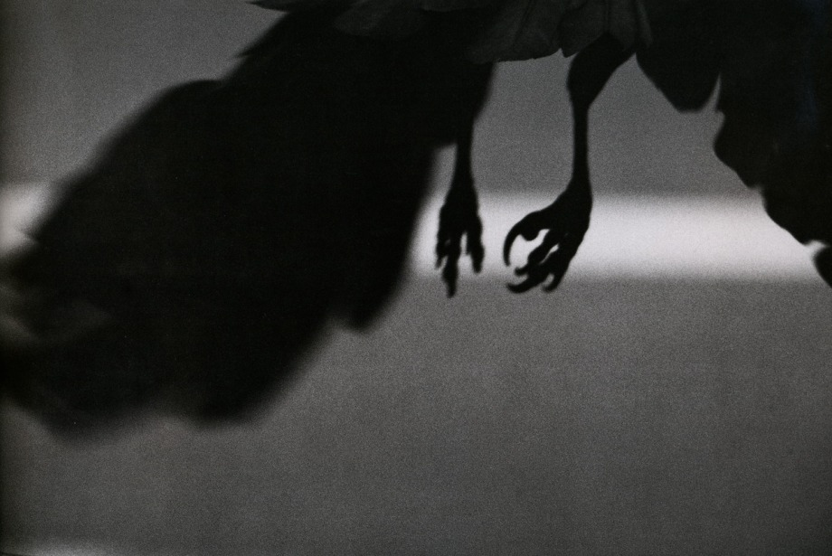 ravens 8