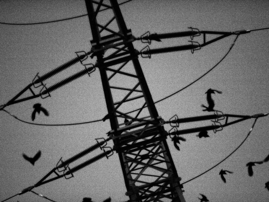 ravens 9