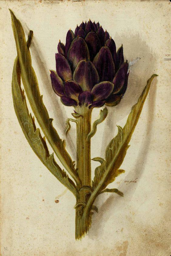 Ulisse Aldrovandi (1522-1605)